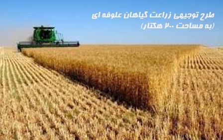 طرح توجيهي زراعت گياهان علوفه اي (به مساحت ۲۰۰ هكتار)