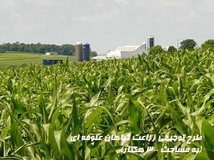 """<span itemprop=""""name"""">طرح توجيهي زراعت گياهان علوفه اي (به مساحت ۳۰۰ هكتار)</span>"""
