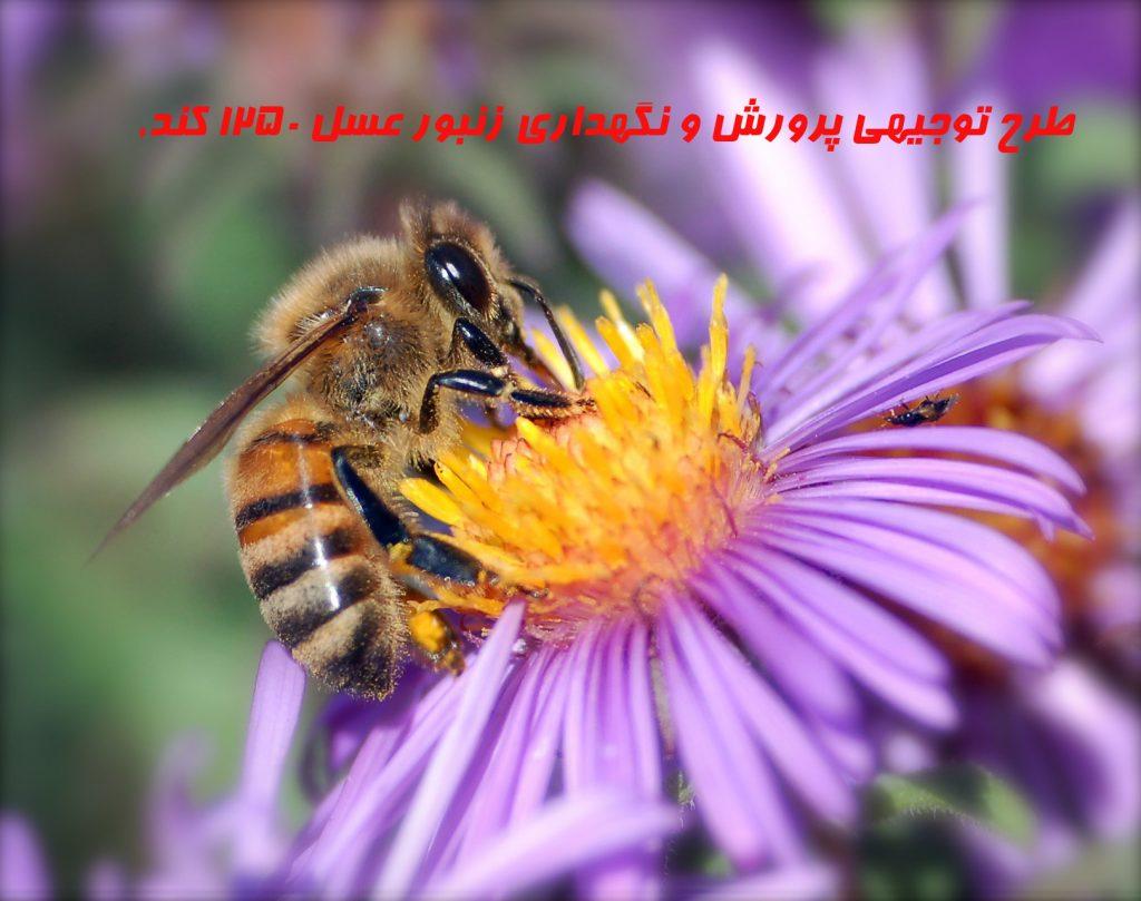 طرح توجیهی پرورش و نگهداري زنبور عسل ۱۲۵۰ کندو