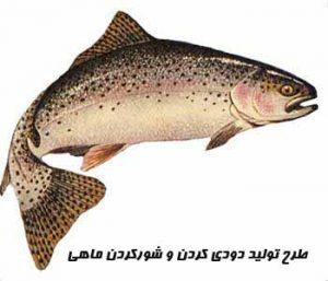 "<span itemprop=""name"">طرح تولید دودي کردن و شورکردن ماهی</span>"