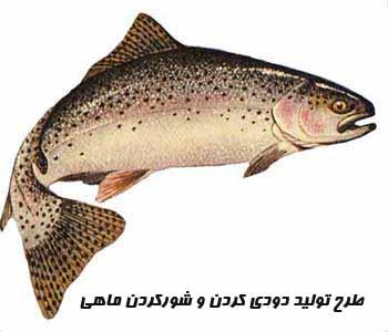 طرح تولید دودي کردن و شورکردن ماهی