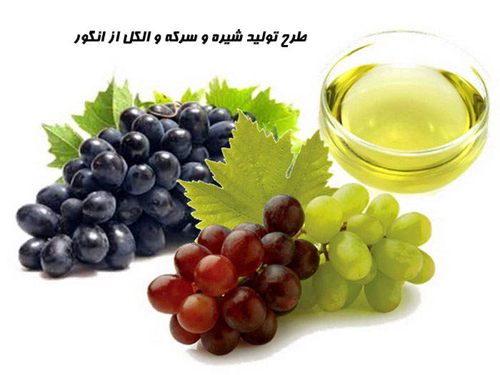 طرح تولید شیره و سرکه و الکل از انگور