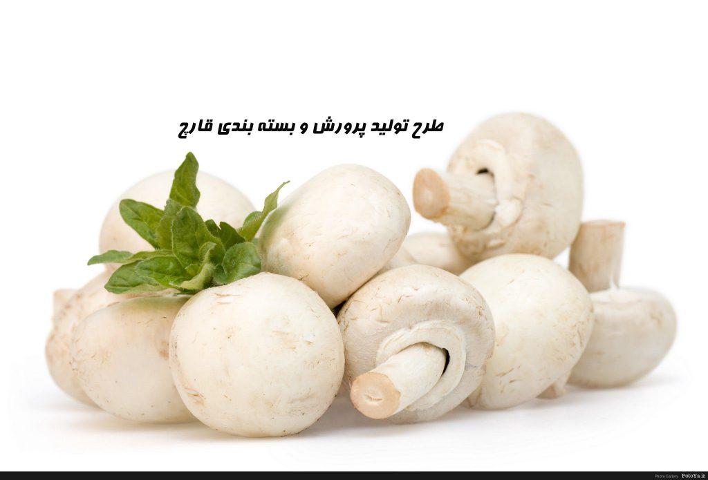 طرح تولید پرورش و بسته بندي قارچ