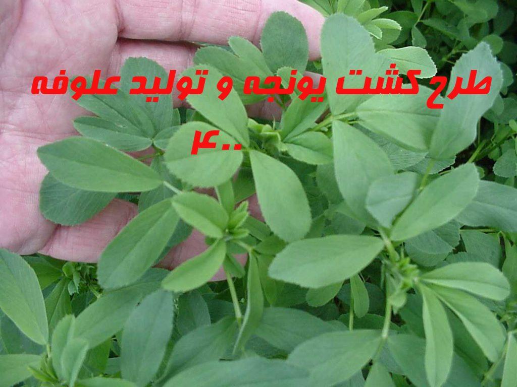 Image result for طرح توجیهی تولید یونجه