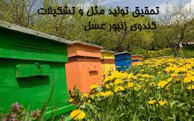 تحقیق تولید مثل و تشکیلات کندوی زنبور عسل