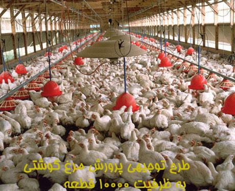 طرح توجيهي پرورش مرغ گوشتي به ظرفیت ۱۰۰۰۰ قطعه