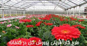 طرح کارآفرینی پرورش گل در گلخانه