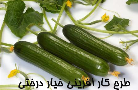 Image result for طرح توجیهی خیار درختی