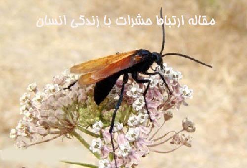 مقاله ارتباط حشرات با زندگی انسان