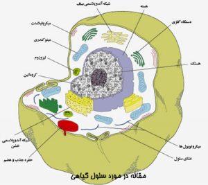 مقاله در مورد سلول گیاهی