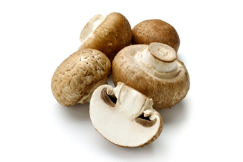 مقاله در مورد قارچهاي خوراكي صدفي