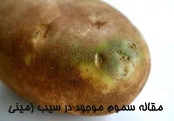 مقاله سموم موجود در سیب زمینی