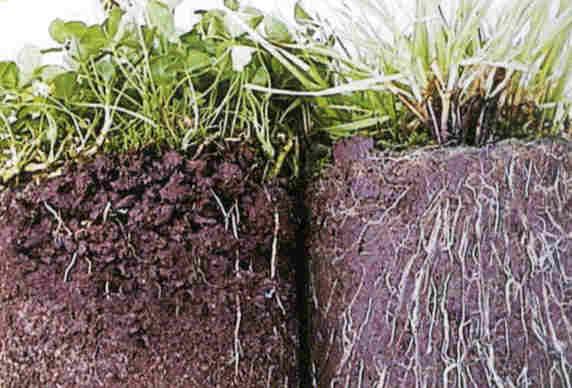 مقاله نقش مواد آلي در افزايش سطح حاصلخيزي خاكهاي زراعي