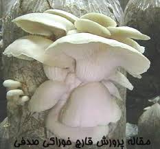 مقاله پرورش قارچ خوراکی صدفی