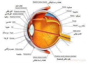 "<span itemprop=""name"">تحقیق در مورد چشم</span>"