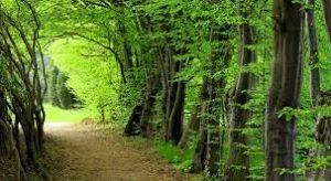 مقاله در مورد جنگل