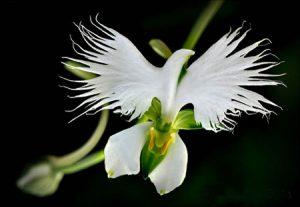 تحقیق انواع گل ۱۵ نوع گل
