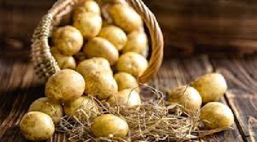 مقاله ارزش غذایی سیب رمینی وروشهای نگهداری آن
