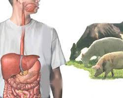سؤالاتی که مورد بیماری تب مالت پرسیده می شود