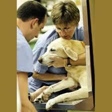 مقاله بیماری های عفونی در دامپزشکی برای حیوانات