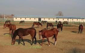 مقاله رفتار شناسی در پرورش اسب