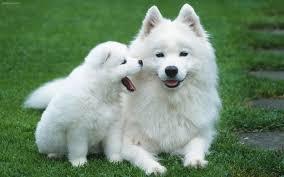 مقاله رفتار شناسی سگها