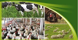 مقاله روش اندازهگيري فسفر در خوراك دام و طيور