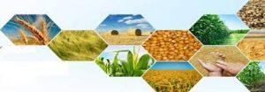 مقاله ويژگيهاي چربي مورد استفاده در خوراك دام و طيور