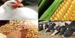 پاورپوینت استاندارد روش اندازهگيري اوره و ازت آمونياكي در خوراك دام و طيور