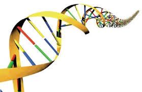 پاورپوینت اصلاح نباتات مهندسی ژنتیک