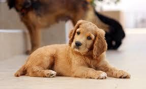 پاورپوینت رفتار شناسی سگ