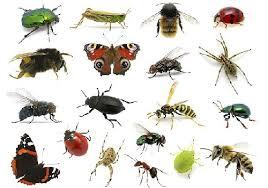 تحقیق و پژوهش در مورد حشرات